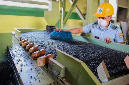 frijol-y-maz-diferente-uso-de-la-misma-planta-procesadora 25038269047 o