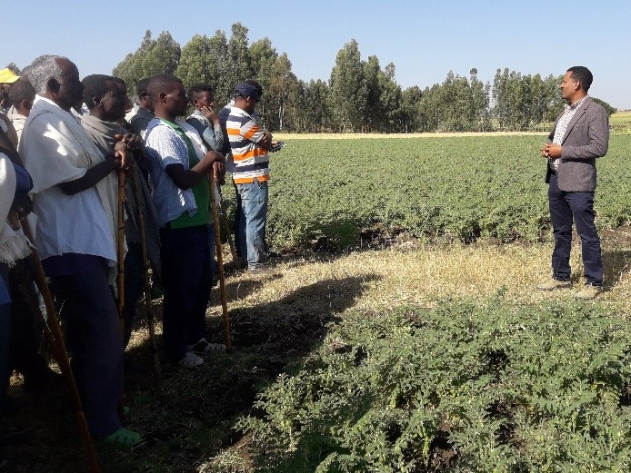 ETHIOPIA – A Story of change on chickpea – CDAIS – Capacity